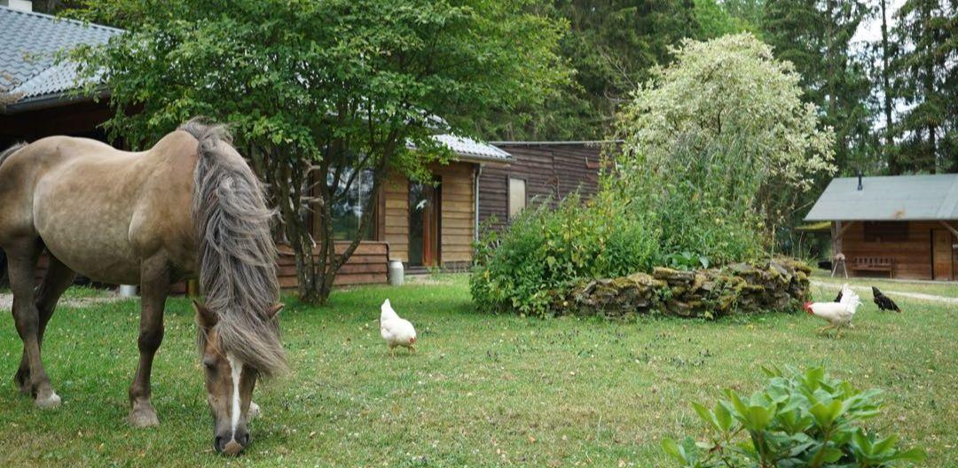 Alex und Hühner