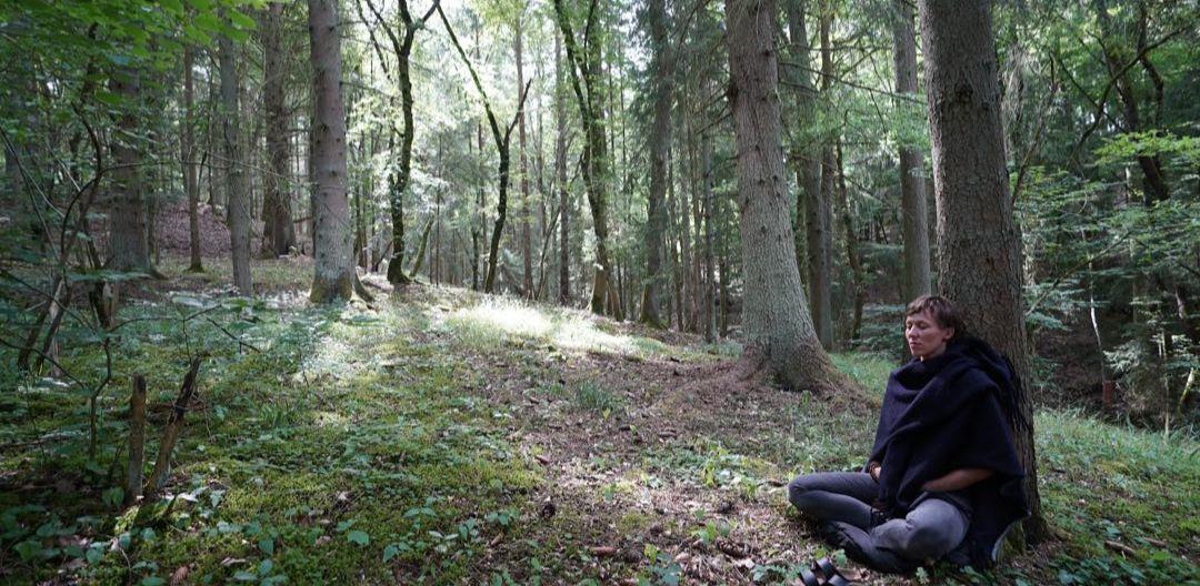 Der Wald bei der Burgruine