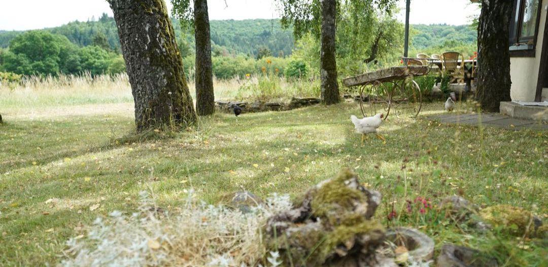 Feilaufendes Huhn